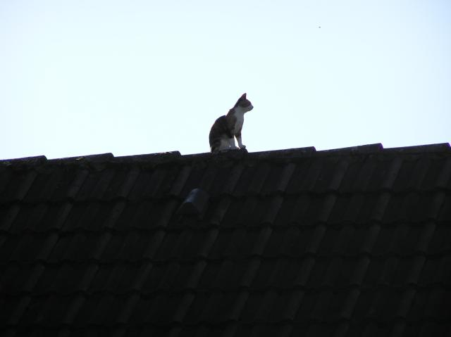 Cats, kittens, roof, house, top, sky